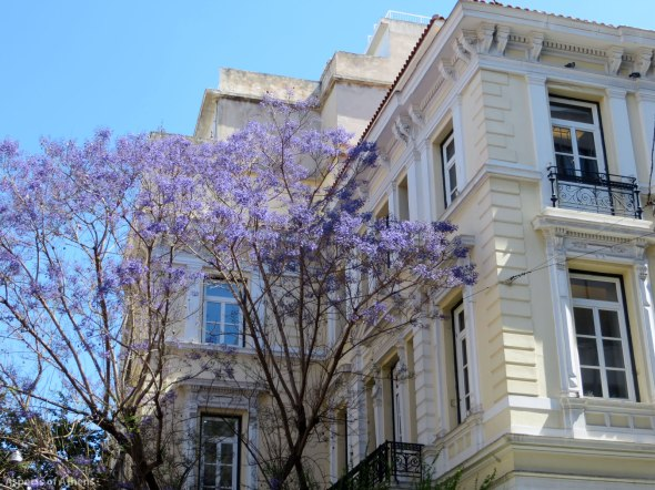Jacaranda in Kapninakreas square